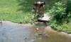 Minnesota Woman Alligator Pit