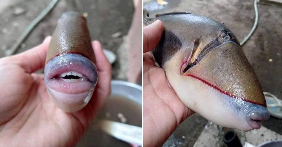 Bizarre Fish with 'Human Teeth' Found in Malaysia