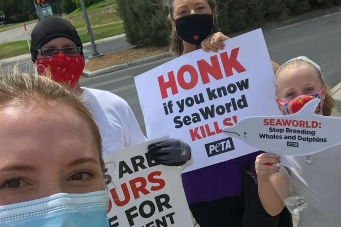 PETA Supporters Urge SeaWorld to Stop Breeding Dolphins and Whales