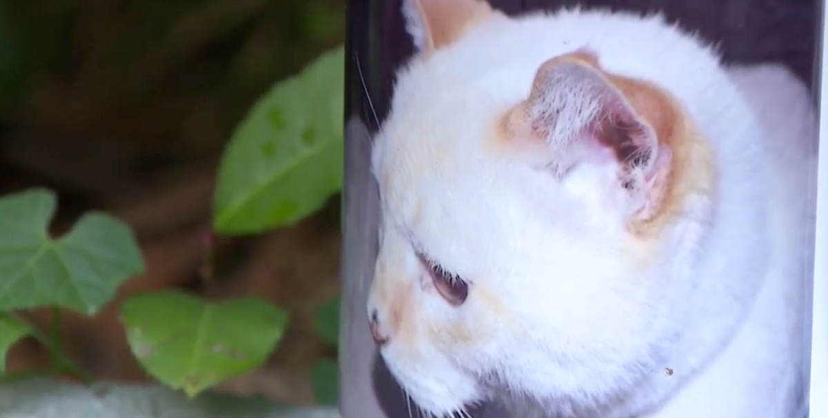 Family's Dead Cat Receives Voter Registration Application in Their Mail