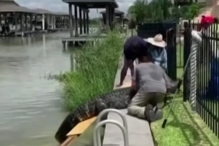 Texas Dad's Quick Reflexes Save 4-Year-Old from 12-Foot Gator