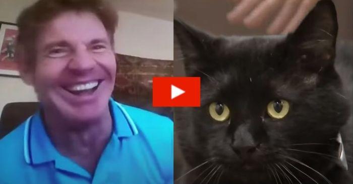 Dennis Quaid Adopts a Shelter Cat Named Dennis Quaid