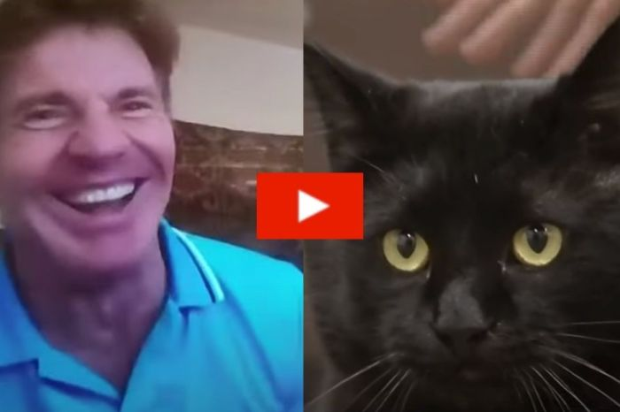 Dennis Quaid Adopts a Shelter Cat Named Dennis Quaid