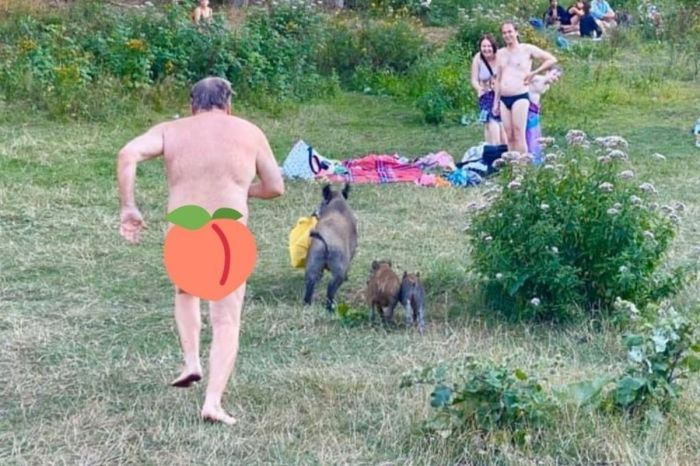 Naked Man Caught Chasing Wild Boar That Stole His Laptop
