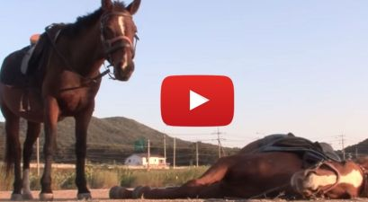 Lazy Horse Plays Dead Whenever People Try to Ride It
