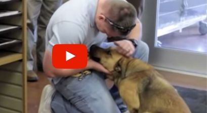 Video of Lost Dog Reunited With Her Dad Has The Internet Sobbing