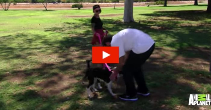 War Veteran Reunited with His Beloved Dogs After Months Apart
