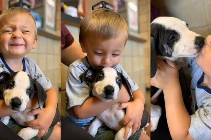 2-Year-Old With Cleft Lip Shares Same Birth Defect with His New Canine Best Friend