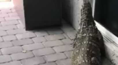 A Giant 6-Foot Lizard Terrorized a Family's Backyard in Florida