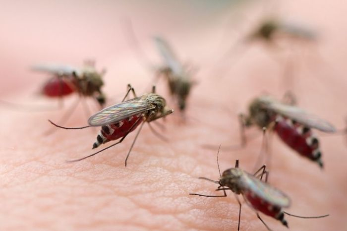 Killer Mosquitoes Have Arrived, Making 2020 Officially The Worst Year Ever