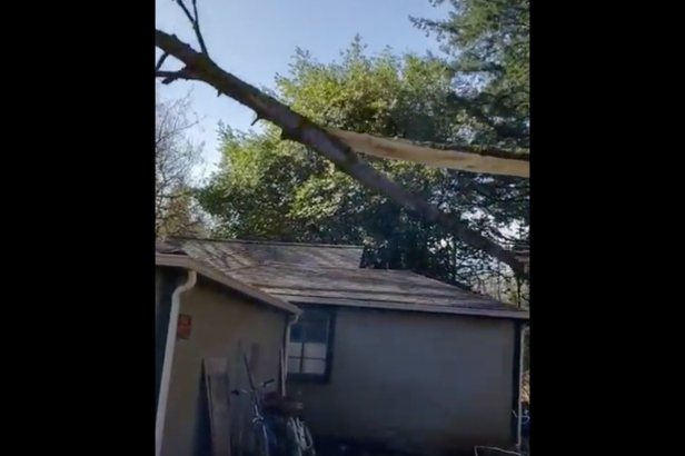 Terrible Lumberjack Crushes House with Massive Tree
