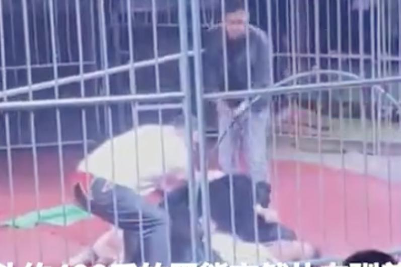 Circus Bear Attack China