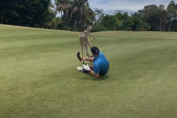 Aggressive Kangaroo Beats Up Helpless Aussie Golfer