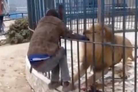 Man Sticks Hand in Lion Enclosure, Lion Bites Man