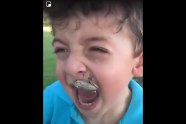 Frog Jumps Onto Little Boy's Arm and Scares Him Senseless, Then it Jumps Into His Mouth