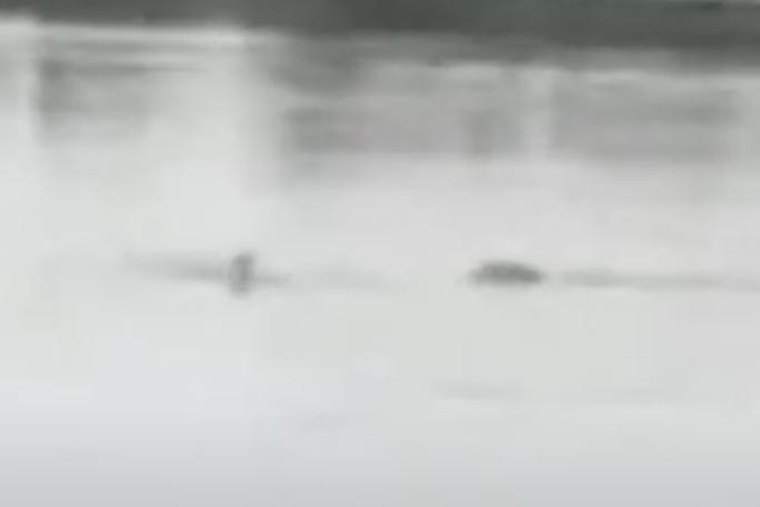 Mexico Crocodile Attack