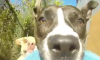 Dog POV Video