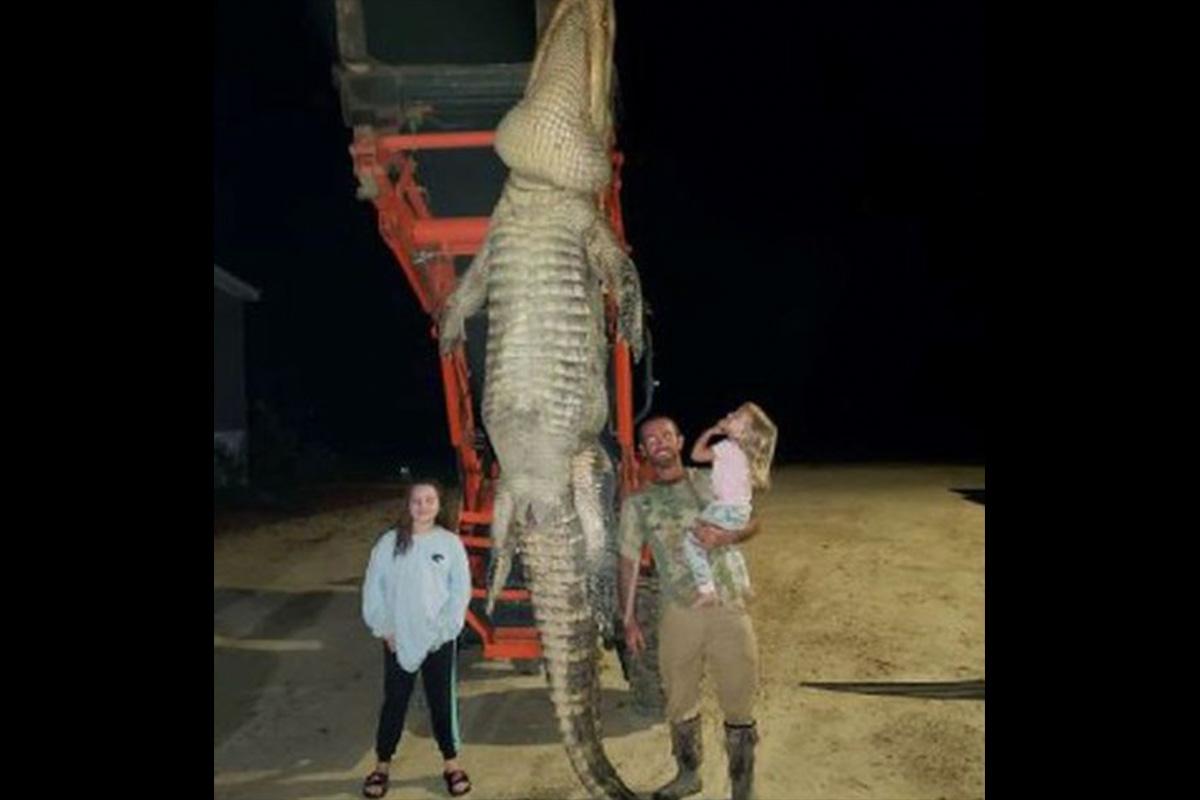 1000 Pound Gator