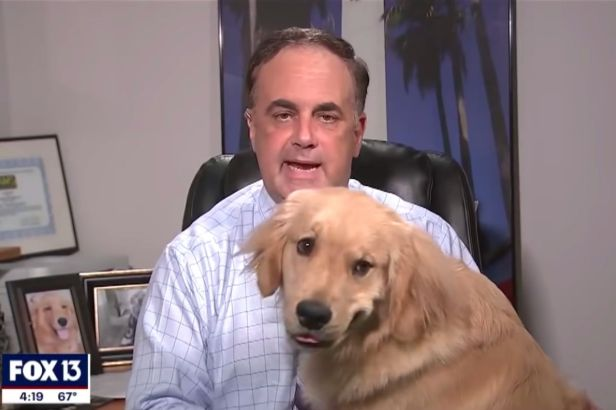 Adorable Dog Hilariously Interrupts Meteorologist During At-Home Weather Report