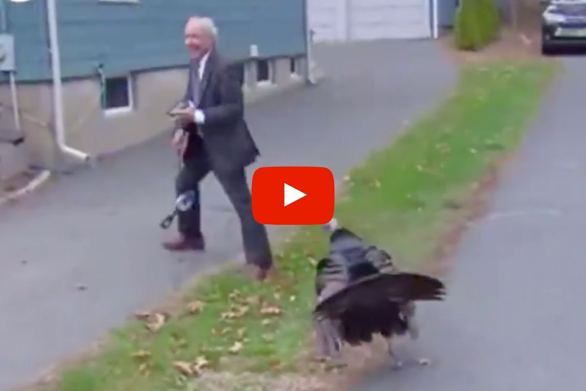 Turkey Hilariously Attacks News Reporter, Tries to Steal His Microphone