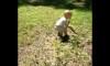 Toddler Snake Fetch