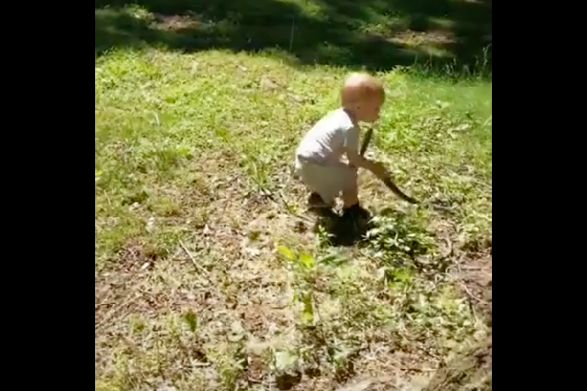 Toddler Snake Fetch