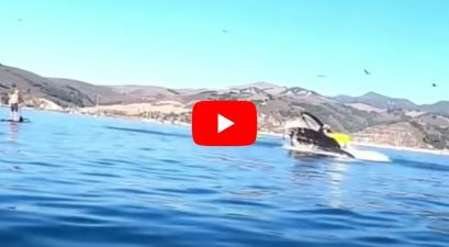 Kayakers Nearly Swallowed Whole by Whale