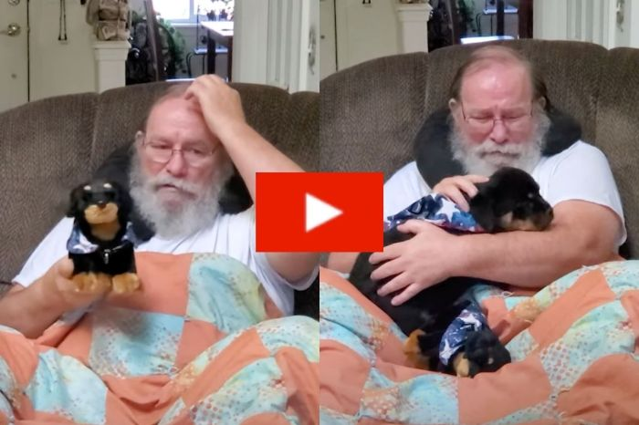 "Dad Sheds Tears When Toy Puppy ""Comes To Life"""