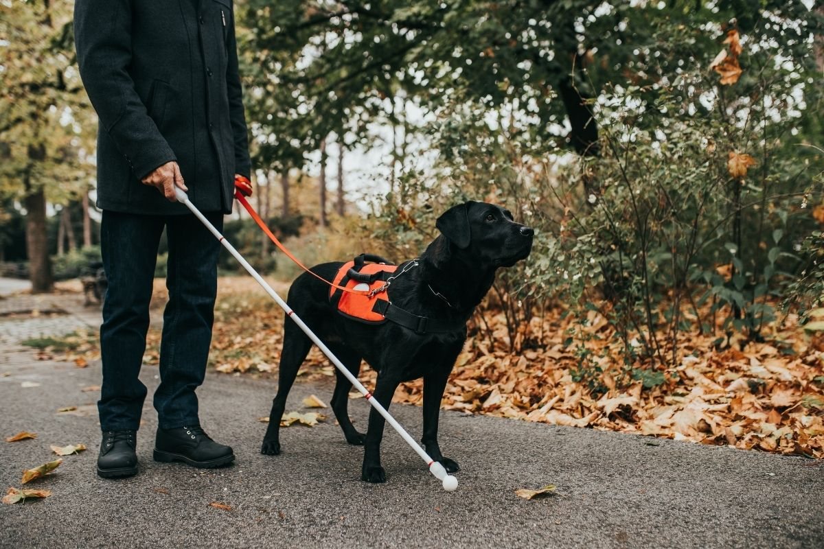 If A Service Dog Approaches You Without Its Owner, They Need Your Help
