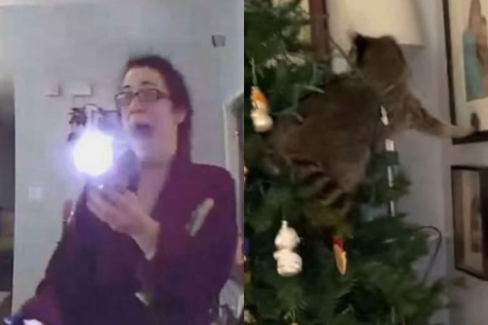 Florida Woman Battles Raccoon Hiding in Christmas Tree, Chaos Ensues in Hilarious Video
