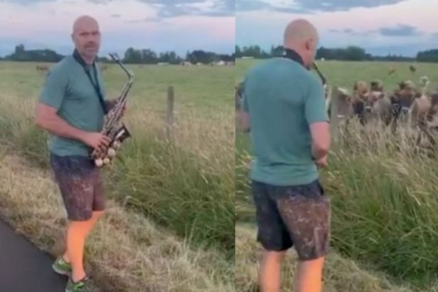 Dad Hilariously Serenades a Herd of Cows With His Saxophone Skills