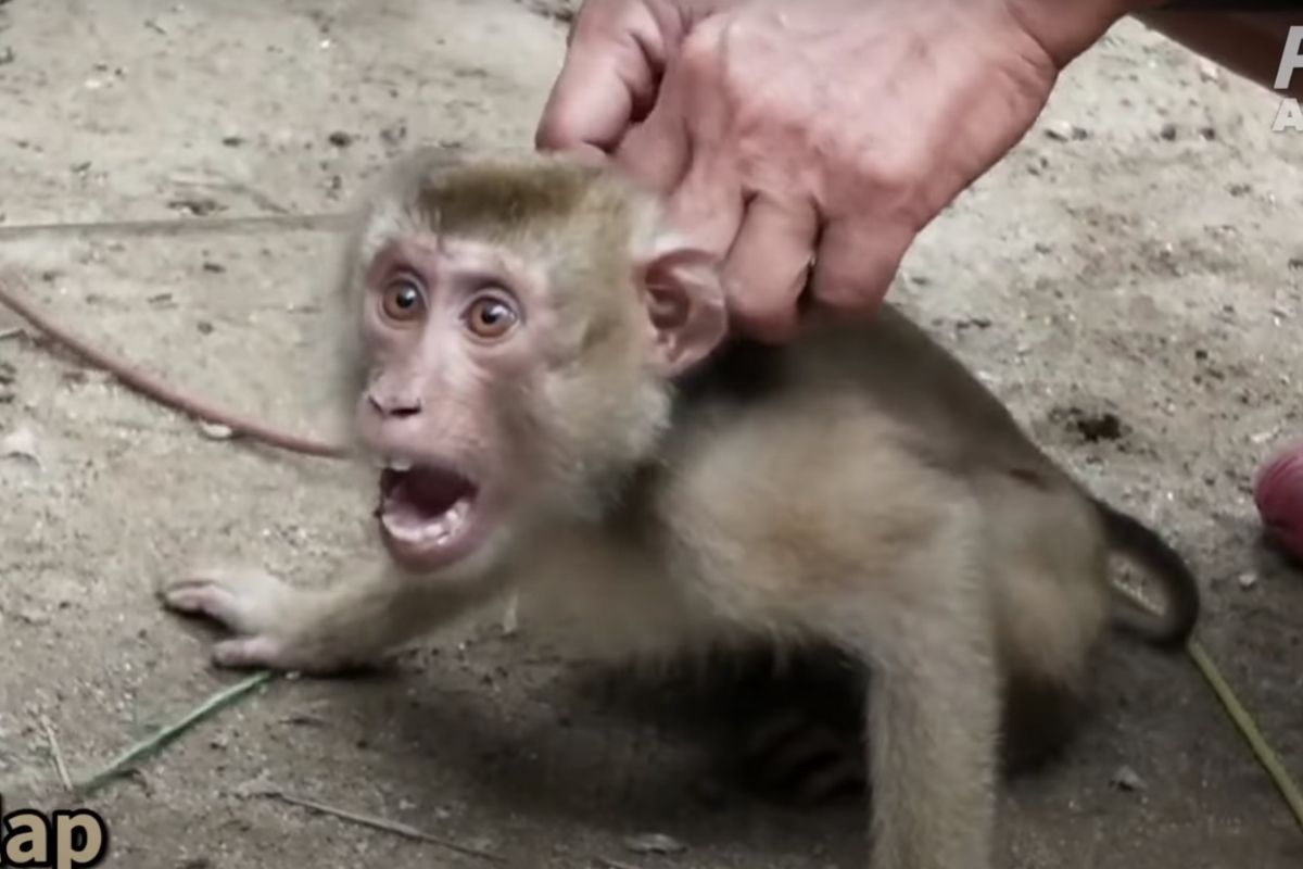 PETA Outrage Causes Target To Drop Chaokoh Coconut Milk Over Monkey Labor