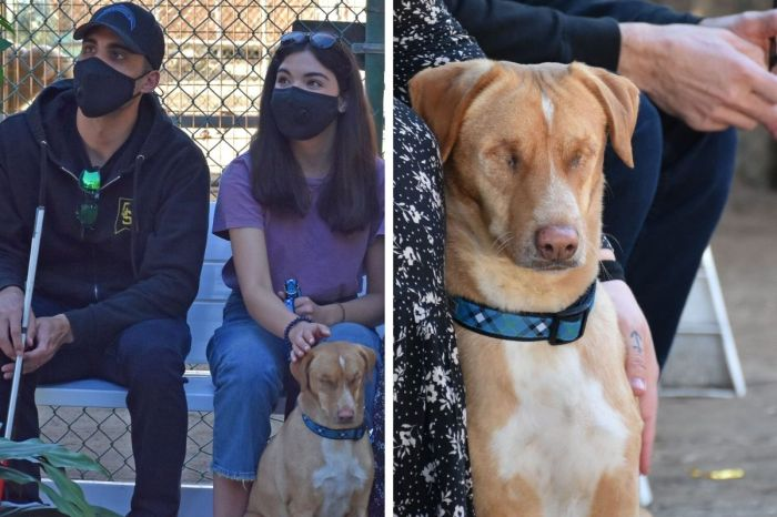 Dog Blinded by Owners is Adopted by Visually-Impaired Marine Corps Veteran!