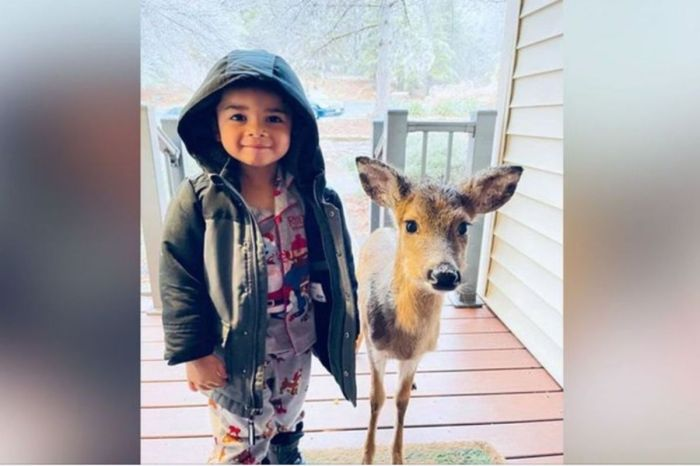 4-Year-Old Boy Brings Home an Adorable, but Unlikely Friend