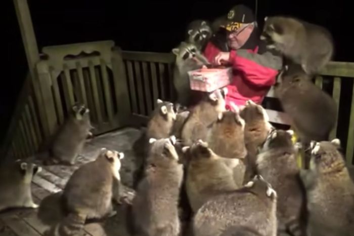 """Raccoon Whisperer"" Has Been Feeding His Furry Friends For Over 20 Years"