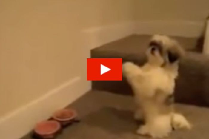 These Adorable Pups Won't Eat Dinner Unless They Pray With Their Human