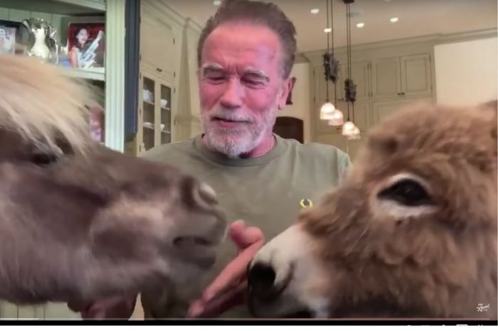 Arnold Schwarzenegger's Owns an Adorable Donkey and Miniature Horse