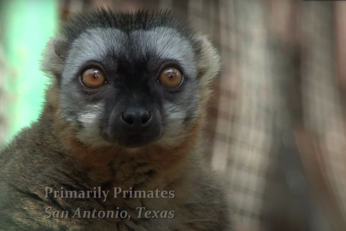 Primates Freeze to Death After Texas Power Outage