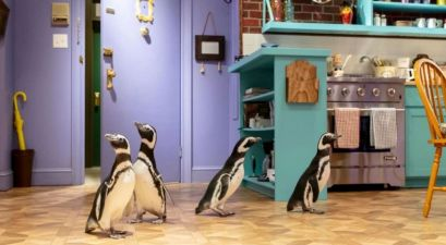 Penguins Ditch the Aquarium for 'Friends' Set