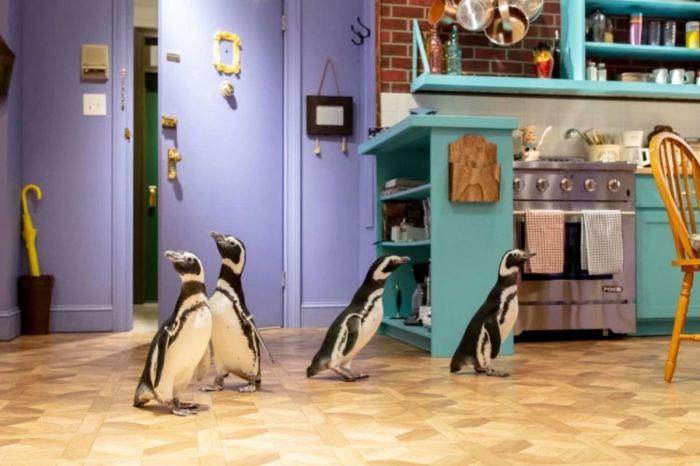 Penguins Ditch the Aquarium for 'Friends' Set