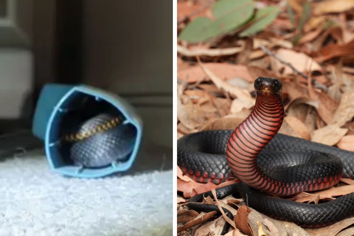 Teenage Girl Finds Snake Sneakily Hiding in Her Asthma Inhaler