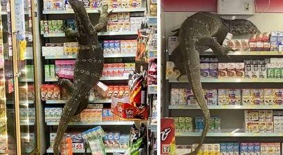 Godzilla-Esque Lizard Terrorizes Convenience Store