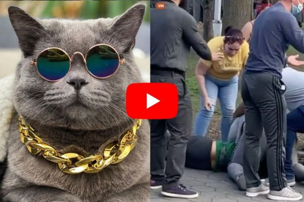 Massive NYC Brawl Caused by Celebrity Cat's Death