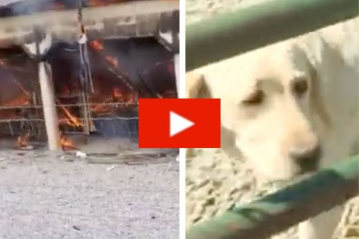 Tragic Fire Kills Over 50 Dogs Including 18 Puppies