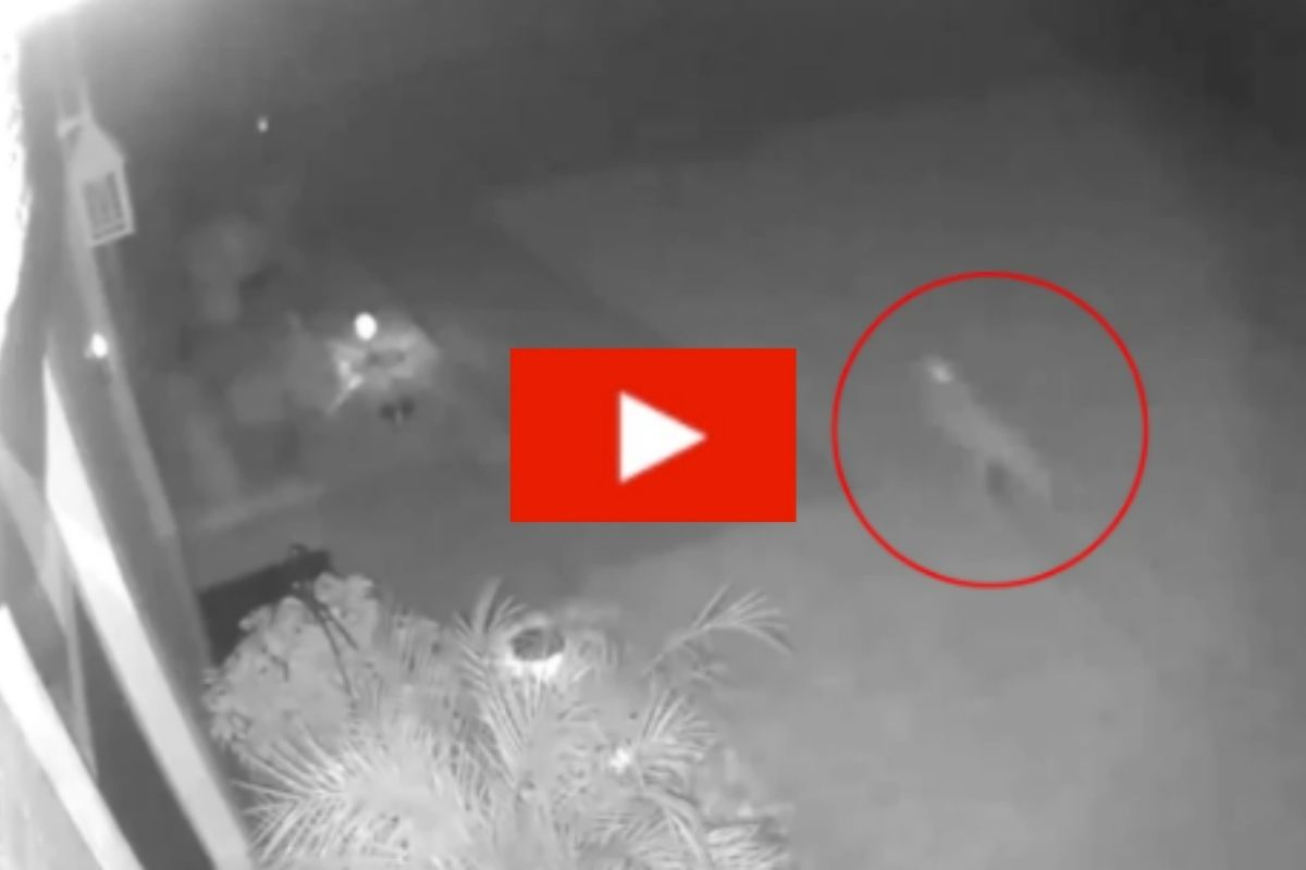 "Woman Catches ""Baby Dinosaur"" Running Through Her Yard on Camera"