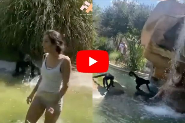 Woman Hops Over Enclosure To Feed Monkeys Hot Cheetos