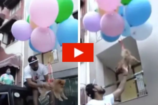 Man Arrested for Tying His Dog to Helium Balloons